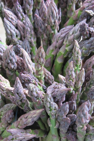 Planting Asparagus – Tips for Growing Asparagus