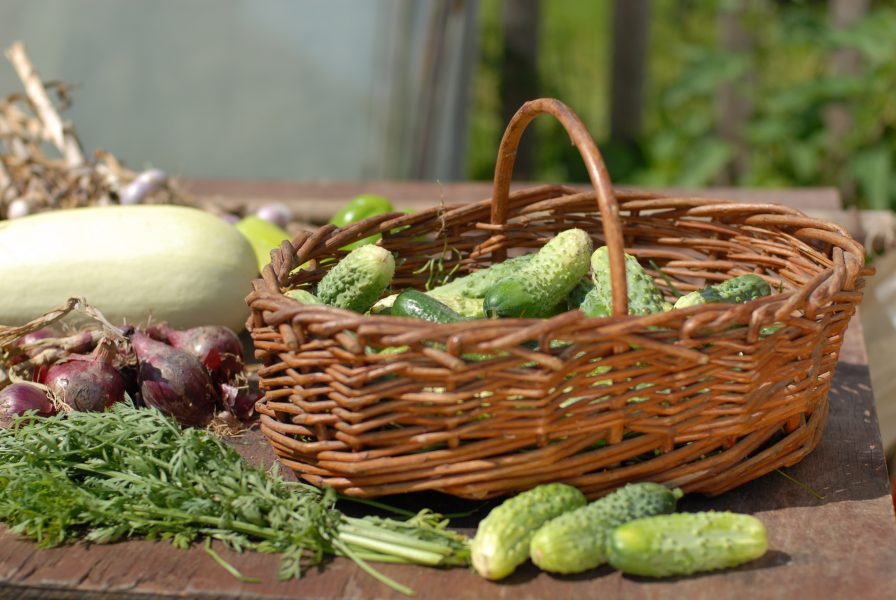 cucumber-basket