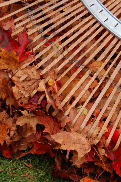 Garden Chores – Fall Yard Clean Up Tips