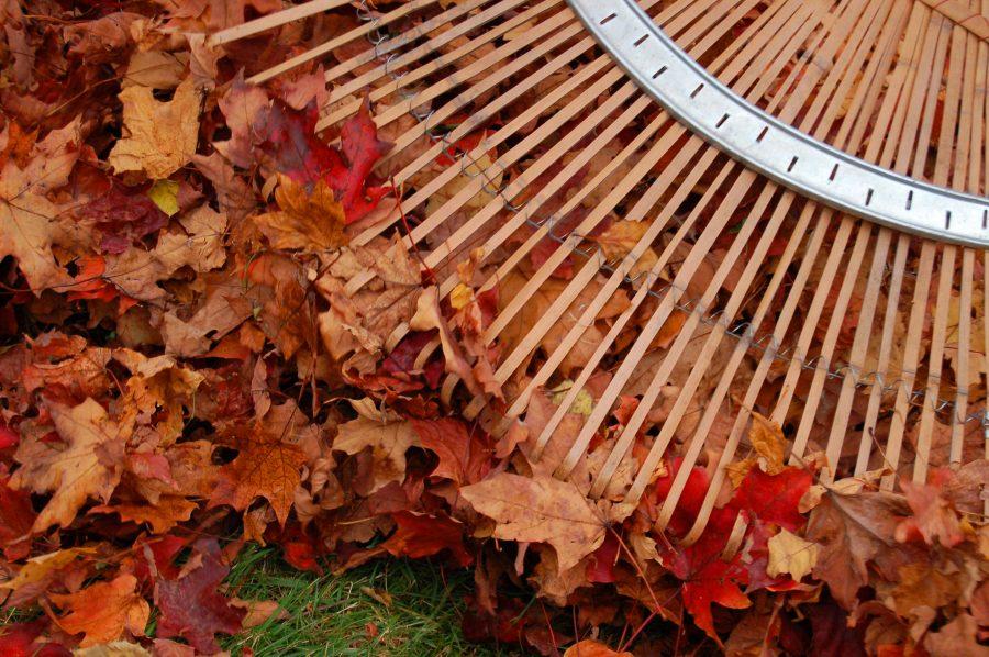 garden-rake